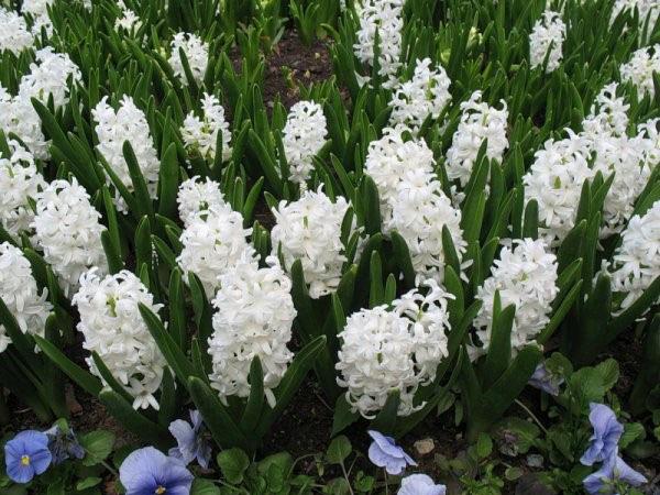 Які квіти перші виростають після зими. Лісові квіти і трави: фото і назви рослин лісової смуги