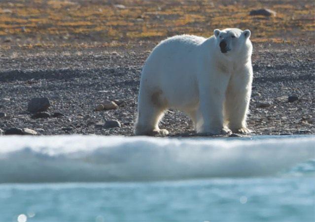Гренландія площа території. Кому належить гренландія і який її статус