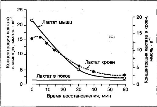 Молочна кислота в мязах. Молочна кислота і біль у мязах після тренувань