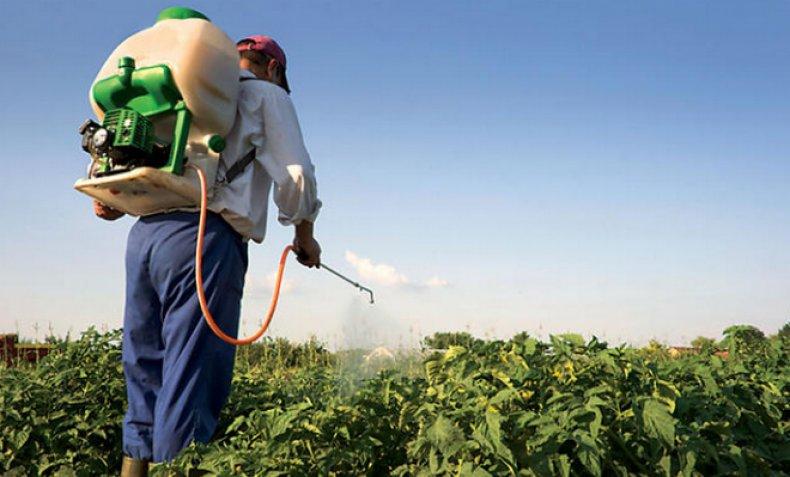 Пестициди наслідки. пестициди-токсичний удар по біосфері і людині