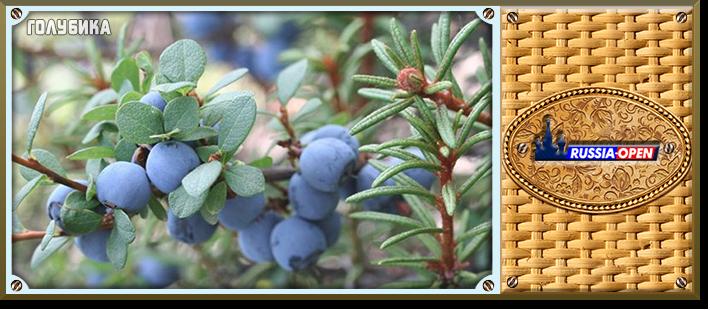 Збір ягід: ягідний календар і правила збору. Морс ягідний збір коли встигають ягоди в лісі