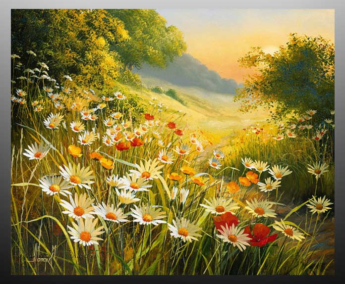 Особливості вирощування великих ромашок. Краща добірка красивих фото і картинок ромашок найкрасивіші ромашки