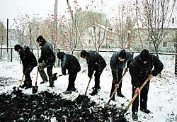 Розплідник догляд після посадки насіння.  догляд за посівами в розпліднику