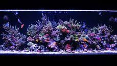 Оформлення акваріума: фото, відео приклади, стилі і варіанти. Акваріум: оформлення своїми руками