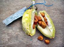 Ірис з насіння. Основні правила вирощування ірису сибірського: посадка і догляд