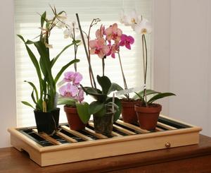Настій з листя алое для поливу рослин. Як поливати алое в домашніх умовах