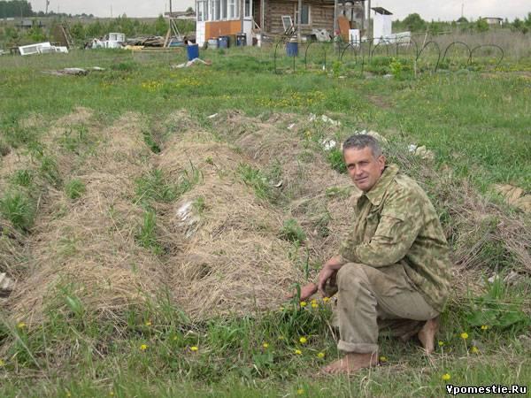 Посадка картоплі під лопату город без клопоту. Як виростити картоплю під сіном і соломою